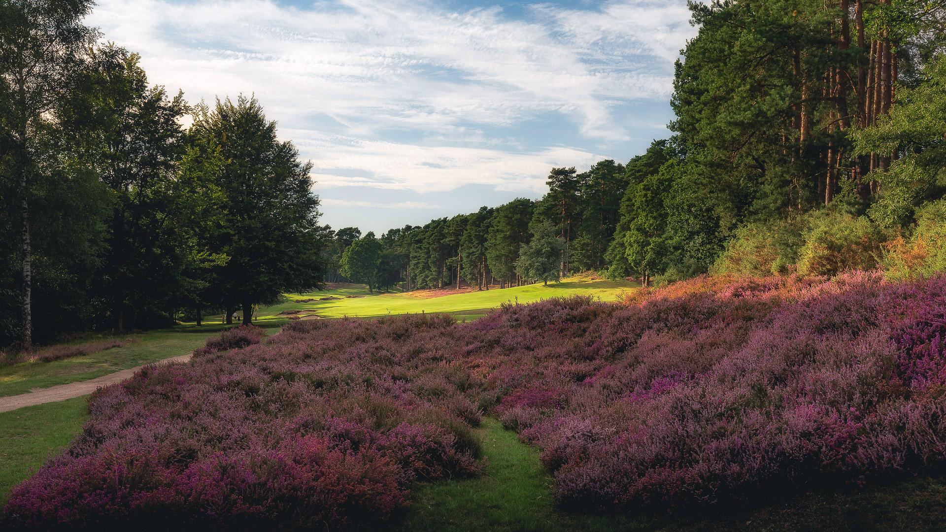 16th-Hole-St-Georges-Hill-Golf-Club-2477-Edit